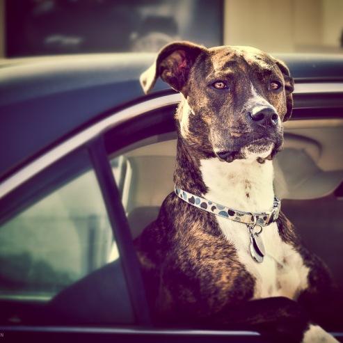 #13 The Dog