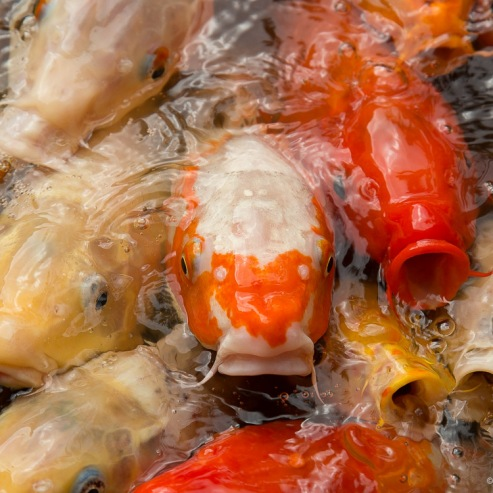 #14 Happy Fish