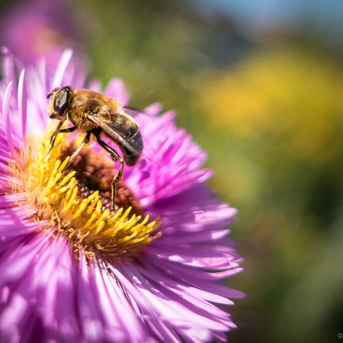 #18 The Busy Bee