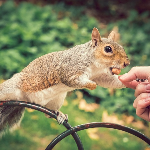 #19 The Hungry Squirrel