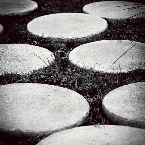 Concrete_Lilies
