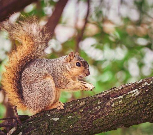 Happy_Squirrel